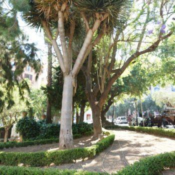 Palme in Palma de Mallorca