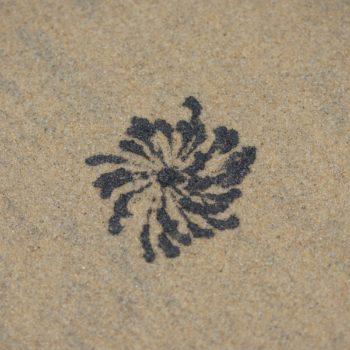 Scopimera sp. (Sand Bubbler Crab)
